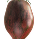 Rebel Starfighter Prime heirloom tomato (Solanum lycopersicum fruit) isolated - PhotoDune Item for Sale