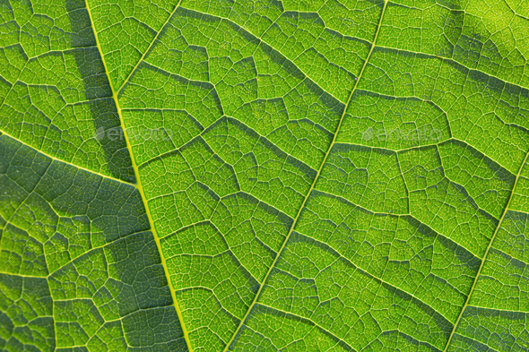 Green leaf closeup - Stock Photo - Images