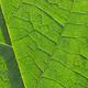 Green leaf closeup - PhotoDune Item for Sale