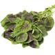 Fresh raw edible amaranth leaves on white background - PhotoDune Item for Sale