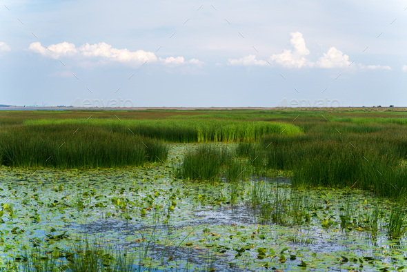 Large swamp with view of city, thickets of grass, water lilies, a city view of reservoir - Stock Photo - Images