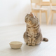 Scottish hungry cat wants to eat, looking pitifully kitten siting in kitchen floor and waiting food - PhotoDune Item for Sale