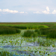 Large swamp with view of city, thickets of grass, water lilies, a city view of reservoir - PhotoDune Item for Sale