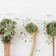 Arugula, basil, flax, watercress sprouts microgreen on wooden and ceramic spoons on white wood - PhotoDune Item for Sale