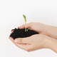 Hands holding ground with green fresh sprout on white background. Earth day concept. Save planet - PhotoDune Item for Sale