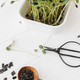 Fresh sunflowers sprouts, wooden spoon, seeds, scissors on white wood. Growing microgreens at home - PhotoDune Item for Sale