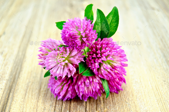 Clover bouquet on the old board - Stock Photo - Images