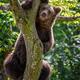 Wild Brown Bear (Ursus Arctos) on tree in the summer forest. Wildlife scene - PhotoDune Item for Sale
