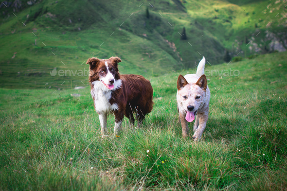 Two dogs - Stock Photo - Images