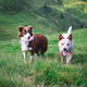Two dogs - PhotoDune Item for Sale