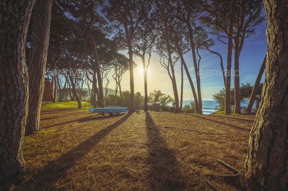 Pine forest and a boat at sunset. Baratti beach, Piombino, Tuscany, Italy. - Stock Photo - Images