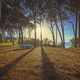 Pine forest and a boat at sunset. Baratti beach, Piombino, Tuscany, Italy. - PhotoDune Item for Sale