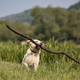 Happy dog running with long stick in mouth - PhotoDune Item for Sale