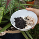 Hand holding crushed egg shell and spent coffee grounds in bowl. Natural organic fertilizers for - PhotoDune Item for Sale