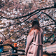 A young beautiful girl under blossom magnolia tree - PhotoDune Item for Sale