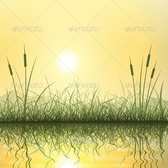 Grass and Reeds - Flowers & Plants Nature