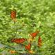 Orange tropical butterflies on flowers - PhotoDune Item for Sale