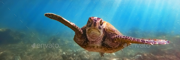 Green sea turtle - Stock Photo - Images