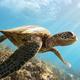 Green sea turtle - PhotoDune Item for Sale
