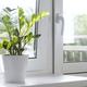 Zamioculcas Zamiifolia or ZZ Plant in white flower pot stand on the windowsill. - PhotoDune Item for Sale