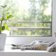 A gray striped domestic cat lies on the windowsill next to the Zamioculcas Zamiifolia flower - PhotoDune Item for Sale