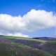 Green meadows and magenta heaths in the high hills near the clouds - PhotoDune Item for Sale
