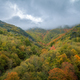 Autumn rainy day over the colorful forest - PhotoDune Item for Sale
