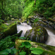 Lush vegetation on the bank of a mighty stream - PhotoDune Item for Sale