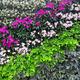 beautiful wall of flowers - PhotoDune Item for Sale