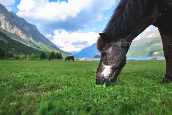 A black horse - Stock Photo - Images