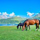 Horses graze - PhotoDune Item for Sale