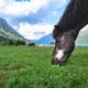 A black horse - PhotoDune Item for Sale