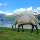 A horse covered and with the wall on the wall - PhotoDune Item for Sale