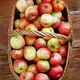 Bright tasty ripe apples in a basket - PhotoDune Item for Sale