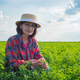Middle age caucasian female farm worker inspecting Medicago field summer time - PhotoDune Item for Sale