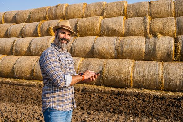 Examining bales of hay - Stock Photo - Images