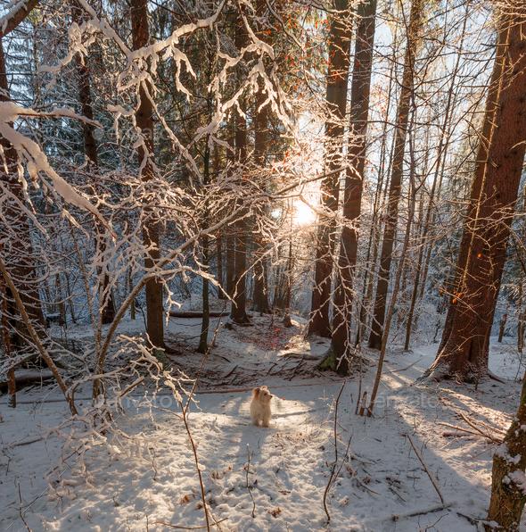 Beautiful winter sunrise - Stock Photo - Images
