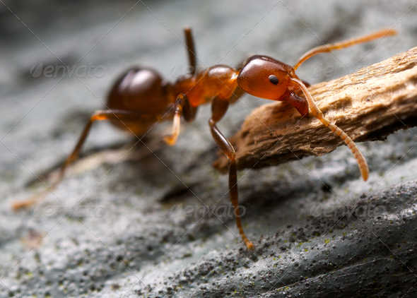strong ant and bark - Stock Photo - Images