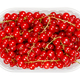 Redcurrant berries, red currant berries, in a plastic container - PhotoDune Item for Sale