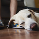 Old dog sleeping on leg his owner - PhotoDune Item for Sale