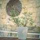 Beautiful Flower Pot - PhotoDune Item for Sale