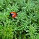 Ladybug on green grass background - PhotoDune Item for Sale