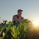 Middle age male caucasian maize farmer kneeled for inspection corn stalks - PhotoDune Item for Sale