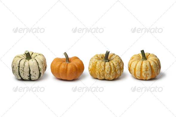 Variety of baby pumpkins - Stock Photo - Images