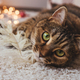 Cat lie on floor. Close up portrait. - PhotoDune Item for Sale
