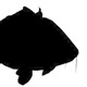 Silhouettes Of Different Fish - VideoHive Item for Sale