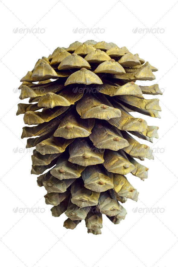 Christmas Golden Pine Cone decoration isolated on white - Stock Photo - Images