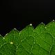 Close-up green leaf on the black background - PhotoDune Item for Sale
