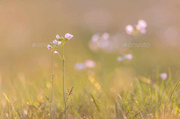 Springtime on a meadow - Stock Photo - Images
