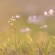 Springtime on a meadow - PhotoDune Item for Sale